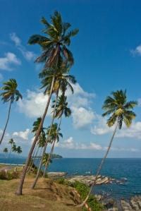 Palms on coast